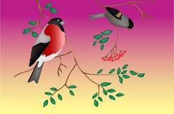 Fåglar på en tree skymning Fotografering för Bildbyråer