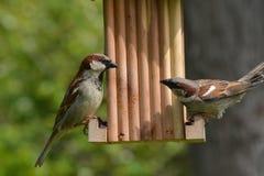 Fåglar på förlagematare Arkivfoto