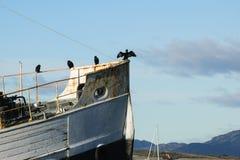 Fåglar på fartyget Arkivbild