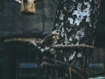 Fåglar på filialen av trädsammanträdet Fotografering för Bildbyråer
