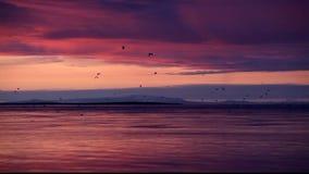 Fåglar på flyget på solnedgången lager videofilmer