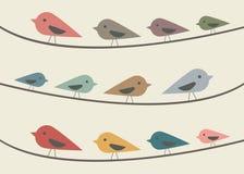 Fåglar på horisontaltrådar Royaltyfri Bild