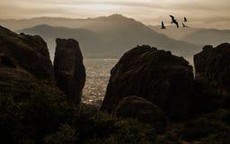 Fåglar på horisonten royaltyfri fotografi