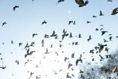 Fåglar på Hyde Park, London Arkivbild