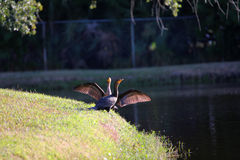 Fåglar på laken Royaltyfria Foton