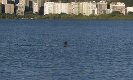 Fåglar på laken Fotografering för Bildbyråer