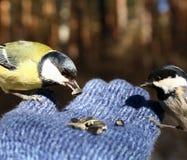Fåglar på min hand Arkivbilder