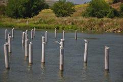 Fåglar på pyloner royaltyfria bilder