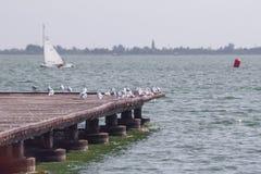 Fåglar på sjön Palic i Serbien arkivfoto