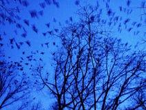 Fåglar på skymning Fotografering för Bildbyråer