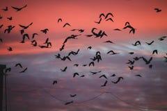 fåglar på solnedgång Royaltyfria Bilder