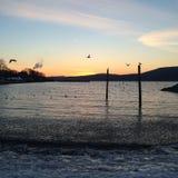 Fåglar på solnedgången Royaltyfri Bild