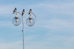 Fåglar på stadslampan Stads- plats, himmelbakgrund Royaltyfria Foton