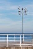 Fåglar på stadslampan Stads- plats, himmelbakgrund Fotografering för Bildbyråer