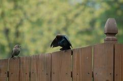 Fåglar på staket Arkivfoto