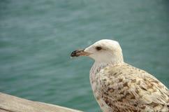 Fåglar på stranden på havet arkivfoton