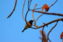 Fåglar på träden Royaltyfria Bilder