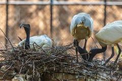 Fåglar på trädet Royaltyfri Fotografi