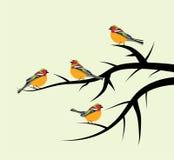 Fåglar på trädfilialer Arkivfoton