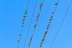 Fåglar på trådar Arkivfoto