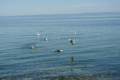 Fåglar på vattnet Royaltyfri Fotografi