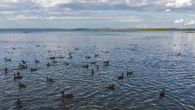Fåglar på vattnet Fotografering för Bildbyråer