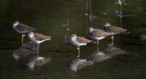 Fåglar på vilar arkivfoto