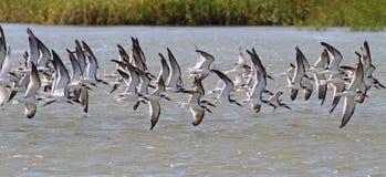 Fåglar på vingen Arkivbild