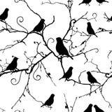 Fåglar på virvlande runt sömlös modell för filialer Fotografering för Bildbyråer