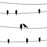 Fåglar på wires2en Arkivfoto