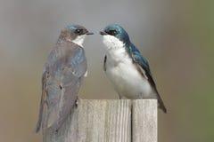 fåglar parar stubben arkivbilder