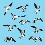Fåglar skissar Teckningsillustration av seagulls stock illustrationer