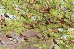 Fåglar som är wild - afrikansk färg i en Bush Arkivfoton