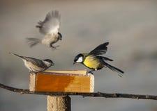 Fåglar som äter från fågelförlagematare Royaltyfria Bilder