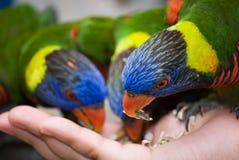 fåglar som 1 matar serier Royaltyfri Fotografi