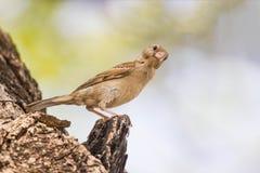 Fåglar som fångades på filialerna av träd, såg det kameran med misstanke arkivfoto