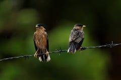 Fåglar som fås som är våta i regnet Arkivfoto