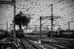 Fåglar som flockas runt om de över huvudet kraftledningarna på den Agra Cantonmentjärnvägsstationen royaltyfri fotografi