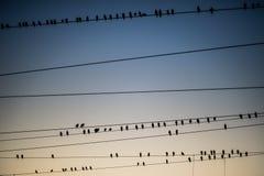 Fåglar som flockas runt om de över huvudet kraftledningarna på den Agra Cantonmentjärnvägsstationen royaltyfria foton