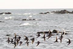 Fåglar som flyger över Indiska oceanen Arkivbilder
