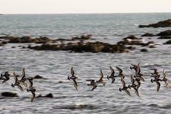 Fåglar som flyger över Indiska oceanen Arkivfoto