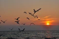 Fåglar som flyger in i solnedgången Royaltyfri Bild