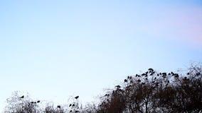 Fåglar som flyger i väg från trädet stock video