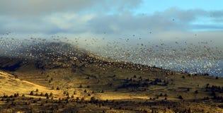 fåglar som flyger migratory over för kullar Royaltyfria Bilder