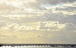Fåglar som flyger ovanför pir till och med himla- moln Arkivfoto