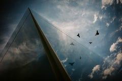 Fåglar som flyger reflexioner Arkivbilder