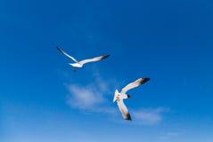 fåglar som flyger skyen Arkivfoton