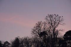 Fåglar som håller ögonen på solnedgången Royaltyfri Bild