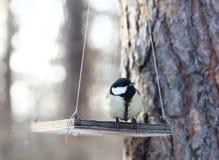 fåglar som matar vinter Royaltyfri Bild