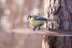 fåglar som matar vinter royaltyfri fotografi